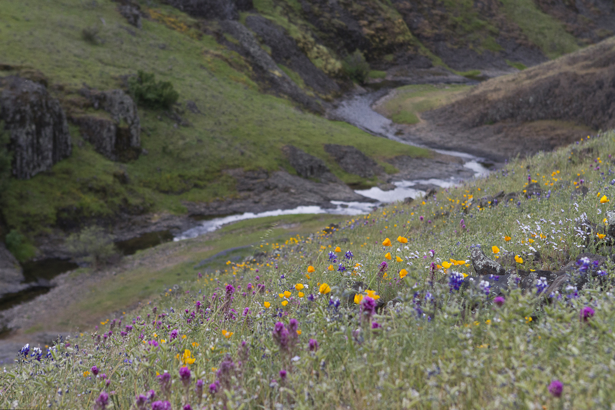 Table Mountain river and flowers. Photo by Clay Duda.