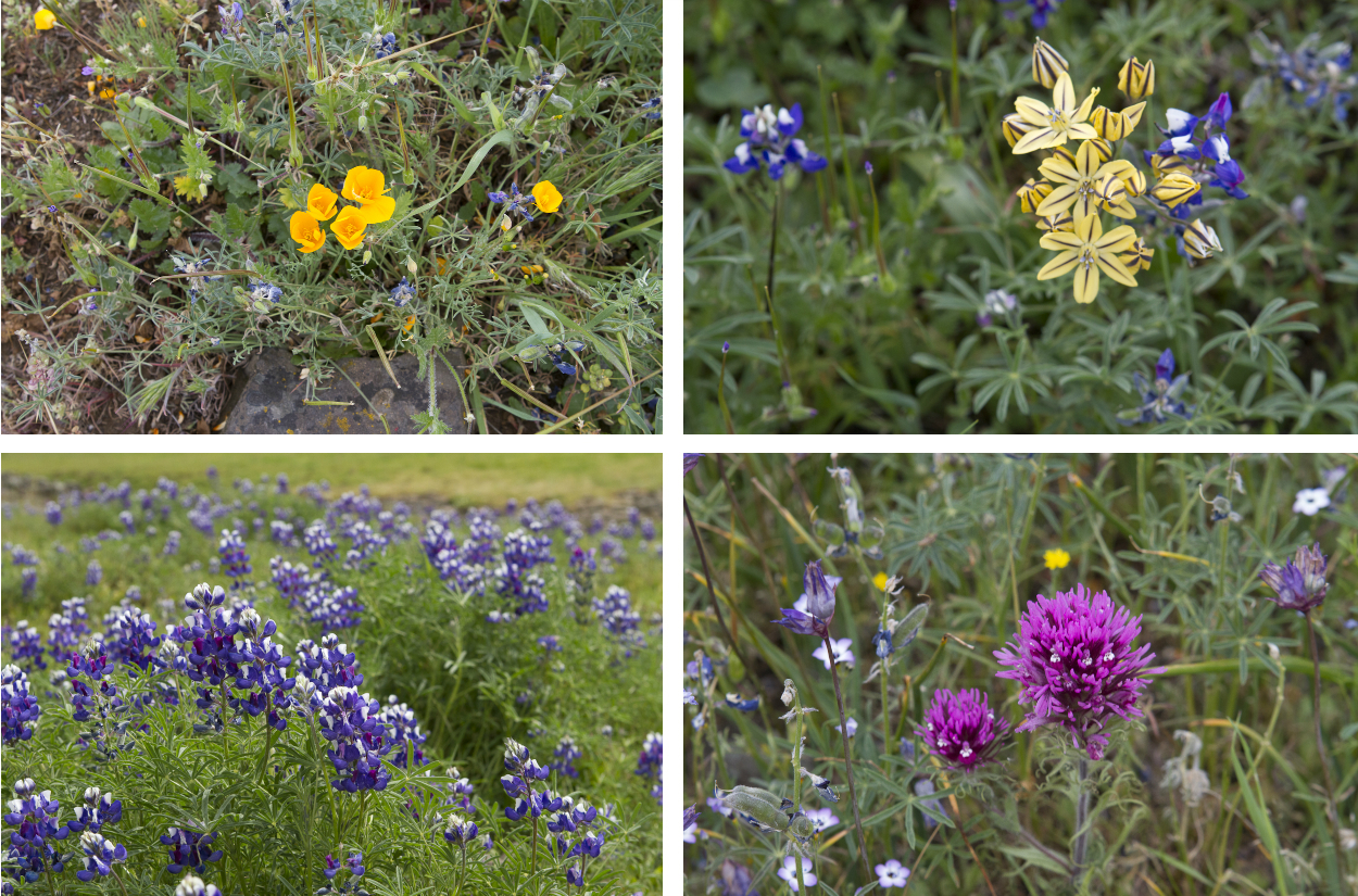 The flowers of Table Mountain. Photos by Clay and Melissa Duda.
