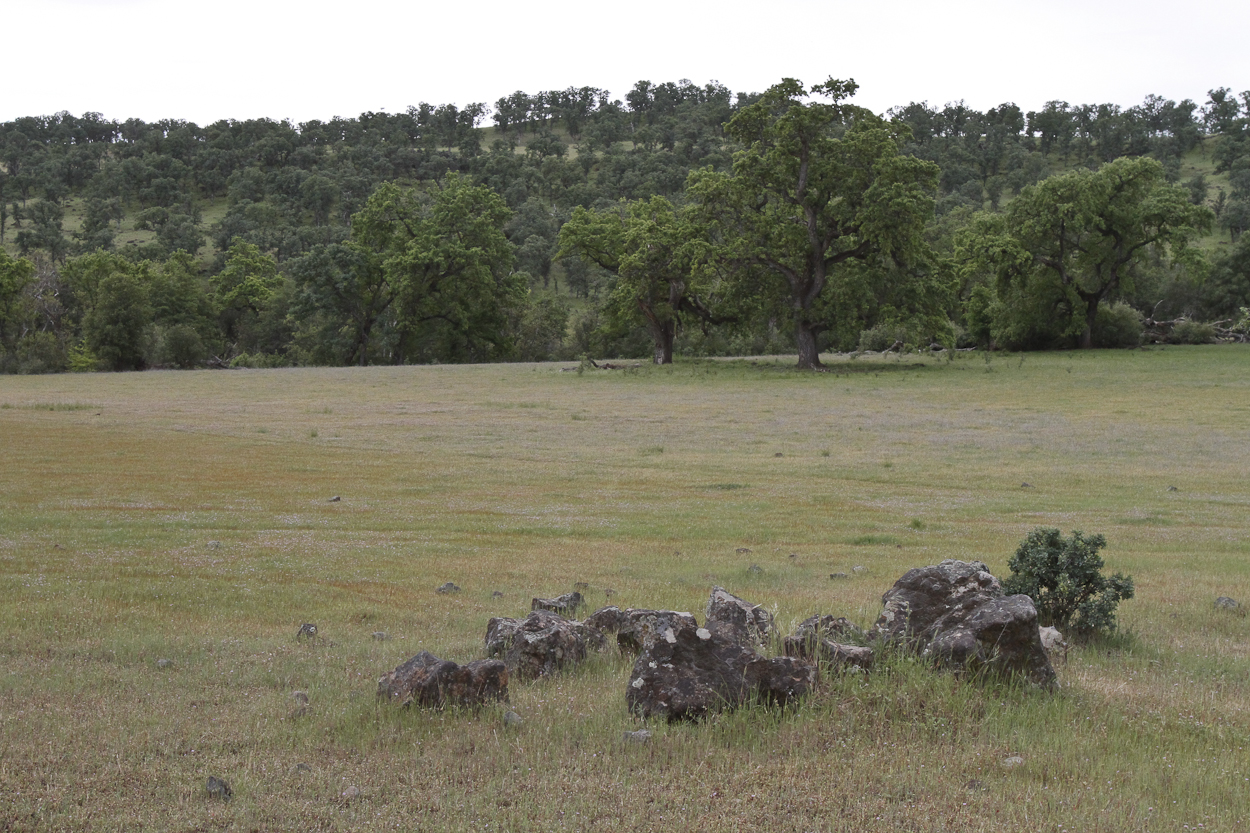 Lava rocks and an oak tree sit in a meadow near the Sacramento River in Red Bluff, California. Photo by Clay Duda.