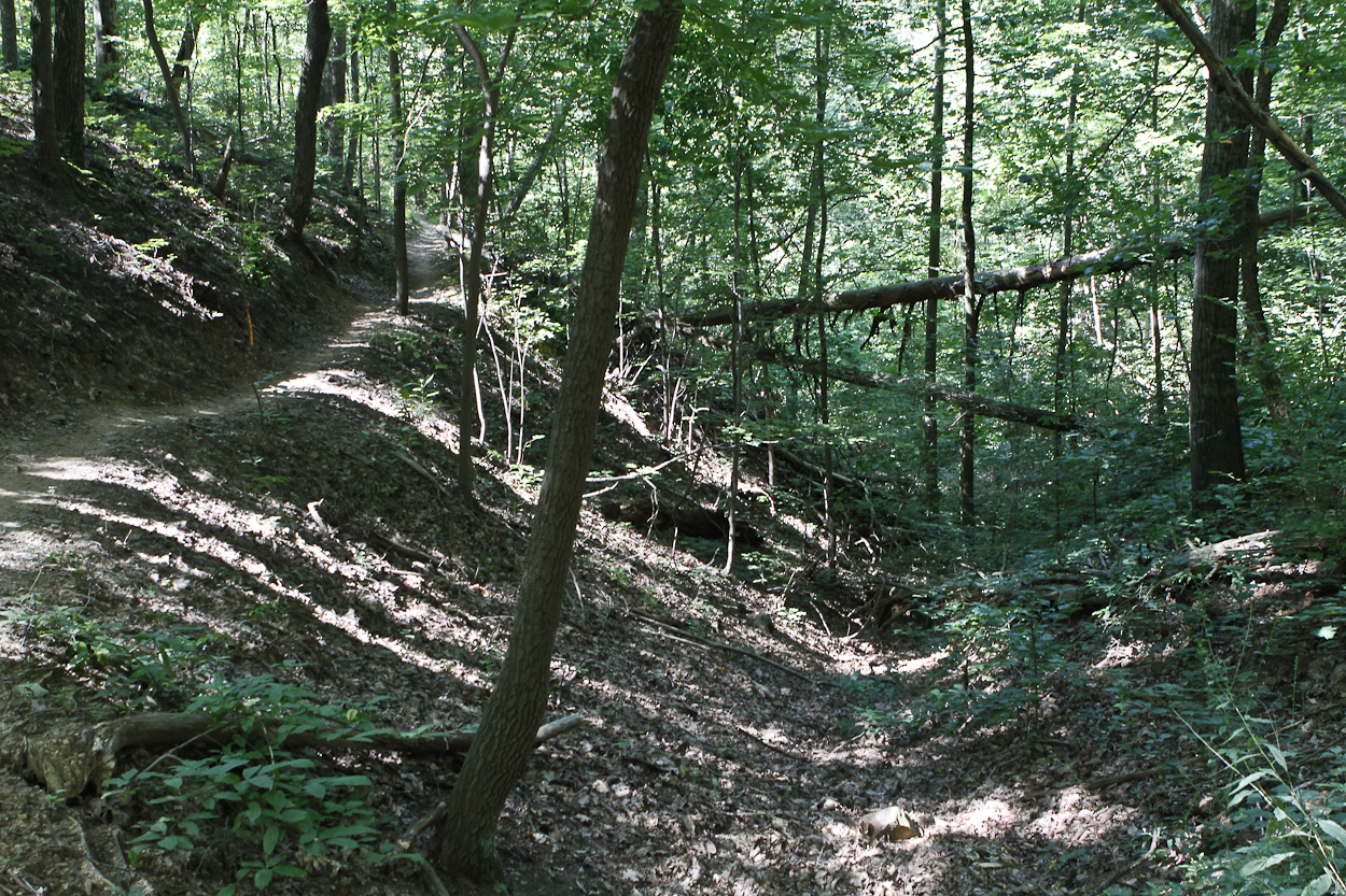 The upper trail at Sharp's Ridge Memorial Park in Knox County. Photo by Clay Duda.
