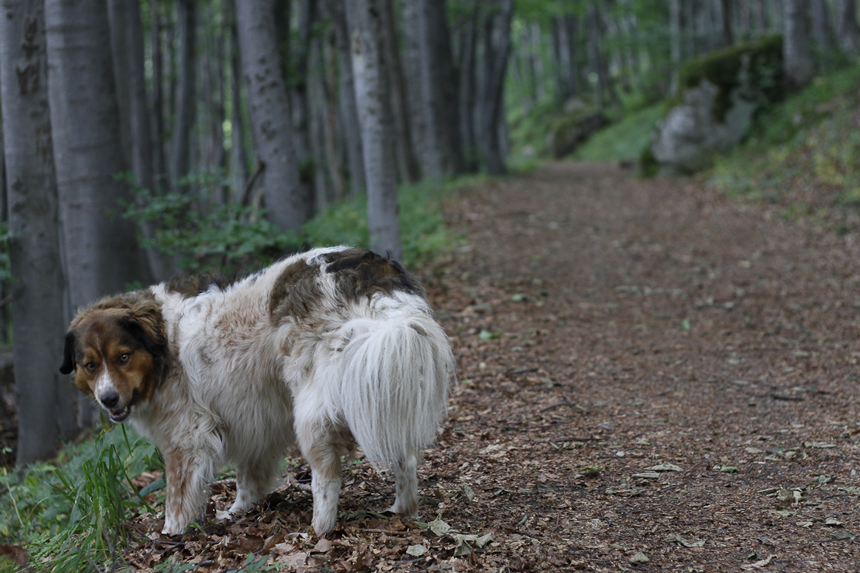 Bitey on the trail near Sofia, Bulgaria, Vitosha Mountain. Photo by Clay Duda.