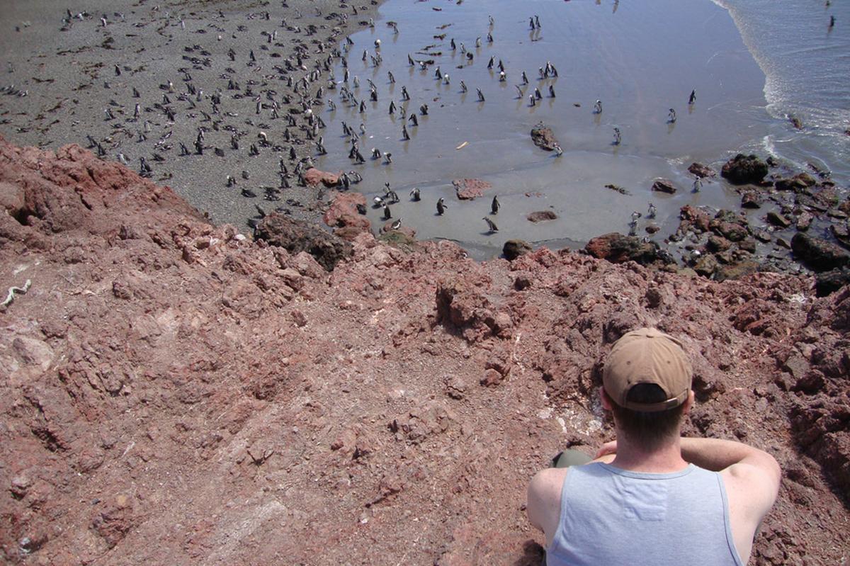 penguins in Punta Tombo.
