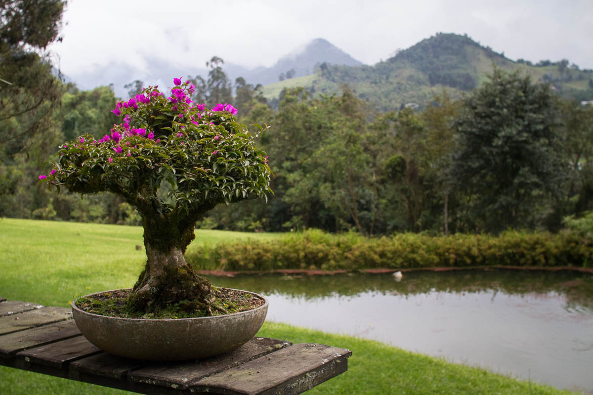 Recinto del Pensamiento. Sera Maltera, Colombia. Photo by Clay Duda.