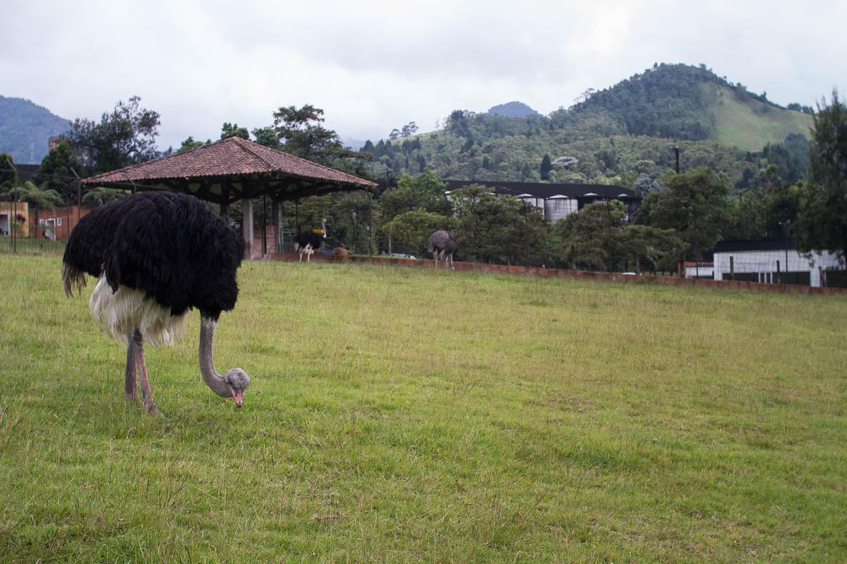 Recinto del Pensamiento. Sera Maltera, Colombia. Photo by Clay Duda.