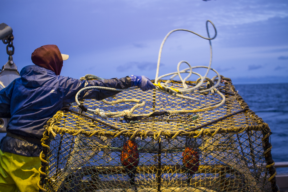Commercial pot fishing in Homer, Alaska.